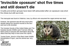 Completely Relevant News: Opossum WIN