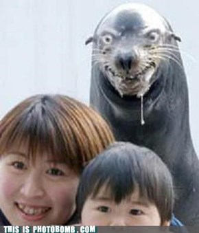 Impending Seal Slaughter in...3, 2..
