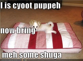 I is cyoot puppeh now bring  meh some shuga