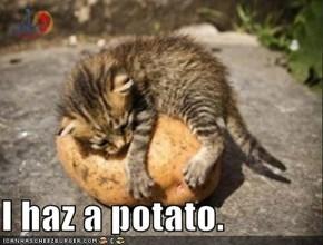 I haz a potato.