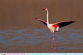Acting Like Animals: Poise, Thy Name is Flamingo