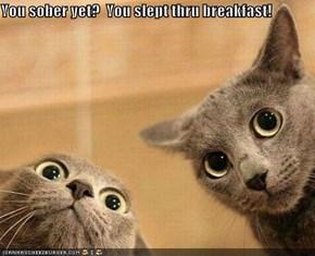 You sober yet?  You slept thru breakfast!