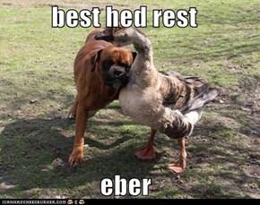 best hed rest  eber