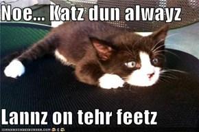 Noe... Katz dun alwayz  Lannz on tehr feetz