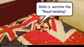"Shhh iz  watchin the ""Royal bedding""."
