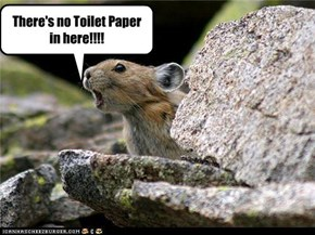 There's no Toilet Paper in here!!!!
