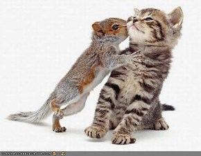 Cyoot Kitteh of teh Day: Dont Kiss Meh, 'Cuz U Smell Liek Akornz