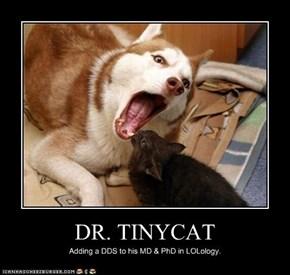 DR. TINYCAT