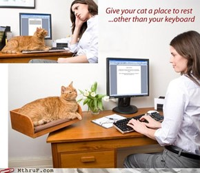 Like That'll Work. The Cat Is There Because It WANTS to Annoy You