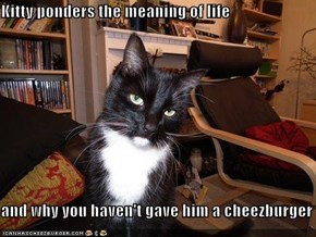 Kitty ponders the meaning of life  and why you haven't gave him a cheezburger