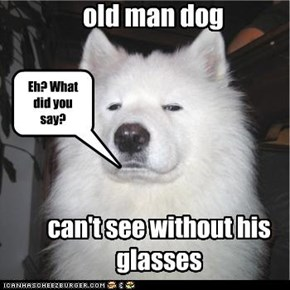 old man dog