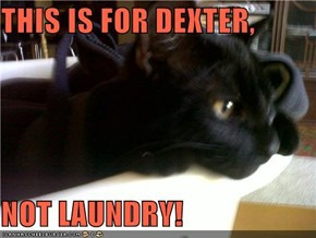 THIS IS FOR DEXTER,  NOT LAUNDRY!