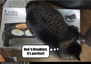 Bed 'n Breakfast. It's purrfect!