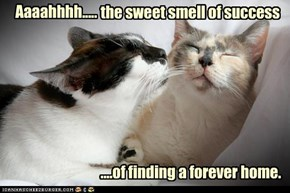 Nothing Smells So Sweet...
