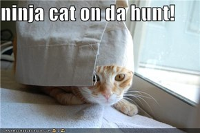 ninja cat on da hunt!