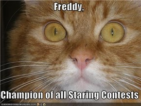 Freddy,  Champion of all Staring Contests