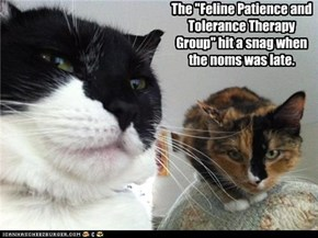 "The ""Feline Patience and Tolerance Therapy Group"" hit a snag when the noms was late."
