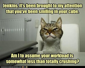 boss cat is watching you