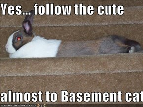 Yes... follow the cute  almost to Basement cat