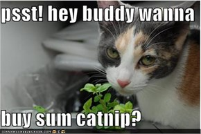 Wanna buy sum catnip