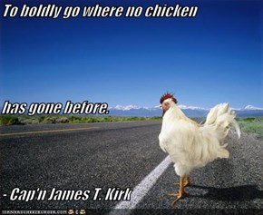 To boldly go where no chicken has gone before. - Cap'n James T. Kirk