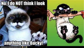 You totally look like Bucky from Get Fuzzy
