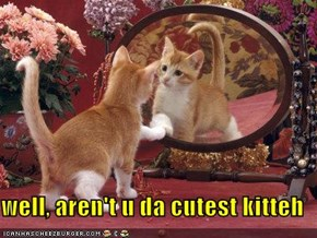 well, aren't u da cutest kitteh