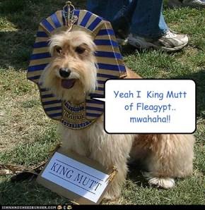 Yeah I  King Mutt