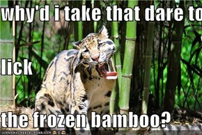 why'd i take that dare to lick the frozen bamboo?
