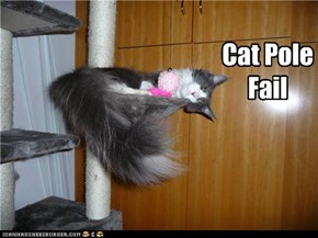 Cat Pole Fail