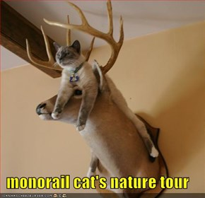 monorail cat's nature tour