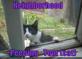 Neighborhood         Peeping   Tom (cat)