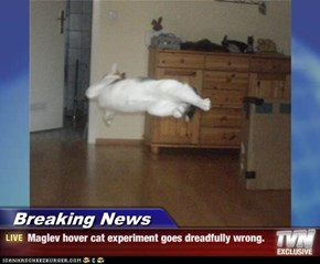 Breaking News - Maglev hover cat experiment goes dreadfully wrong.