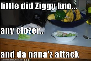 little did Ziggy kno... any clozer.. and da nana'z attack