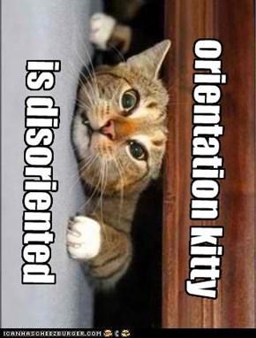 orientation kitty