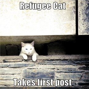 Refugee Cat  Takes first post