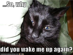 ...So, why   did you wake me up again?