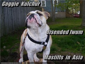 Goggie  Kulchur  disended fwum  Mastiffs  in  Asia