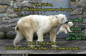 All the little cubs