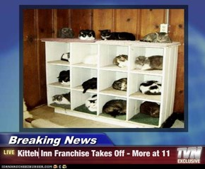 Breaking News - Kitteh Inn Franchise Takes Off - More at 11