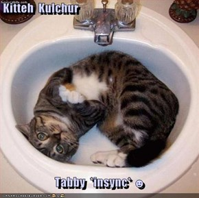 Kitteh  Kulchur     Tabby  *insync* ☻