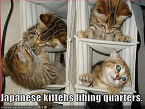Japanese kittehs libing quarters.