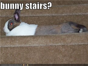 bunny stairs?