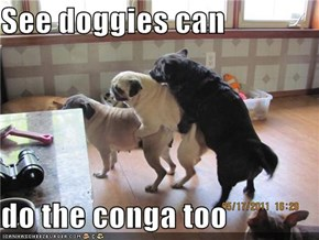 See doggies can  do the conga too