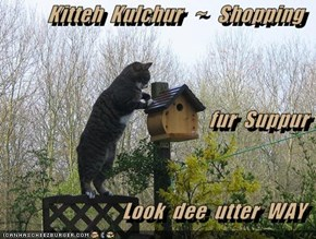 Kitteh  Kulchur   ~   Shopping fur  Suppur Look  dee  utter  WAY