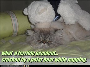 what  a terrible accident...  crushed by a polar bear while napping.