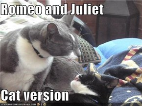 Romeo and Juliet  Cat version