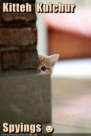 Kitteh  Kulchur   Spyings ☻