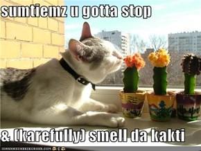 sumtiemz u gotta stop  & (karefully) smell da kakti