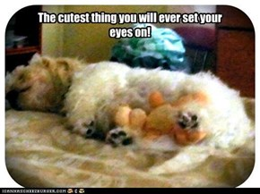 The cutest thing you will ever set your eyes on!
